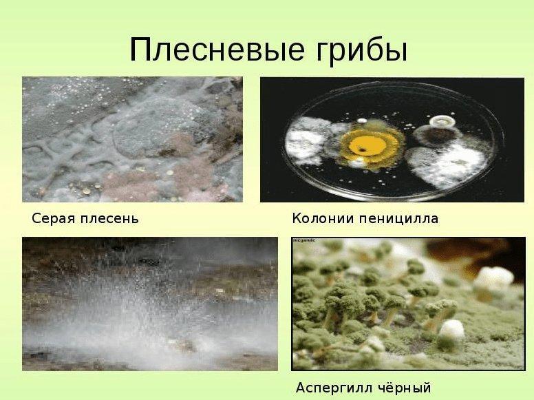 грибок на обоях
