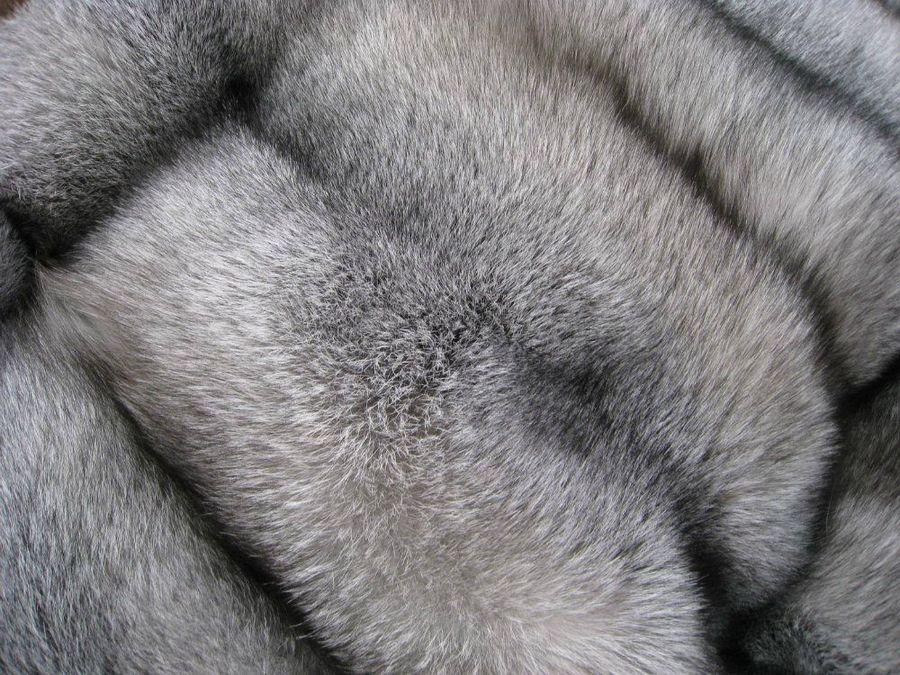 Как чистить мех чернобурки в домашних условиях основные принципы