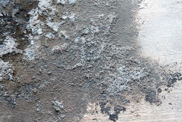 Плесневые грибки на поверхности