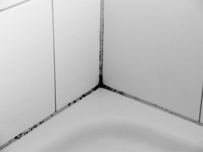 грибок на плитке