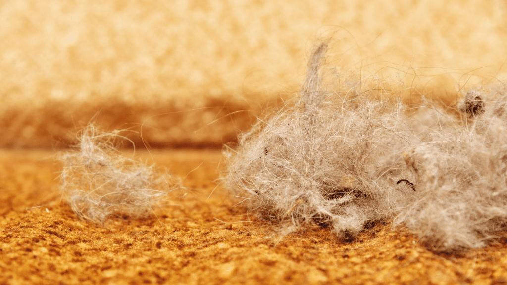 Как убрать шерсть домашних животных